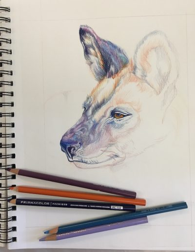 drawing painting animals 11